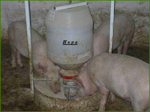 Кормушка для свиней своими руками с фото